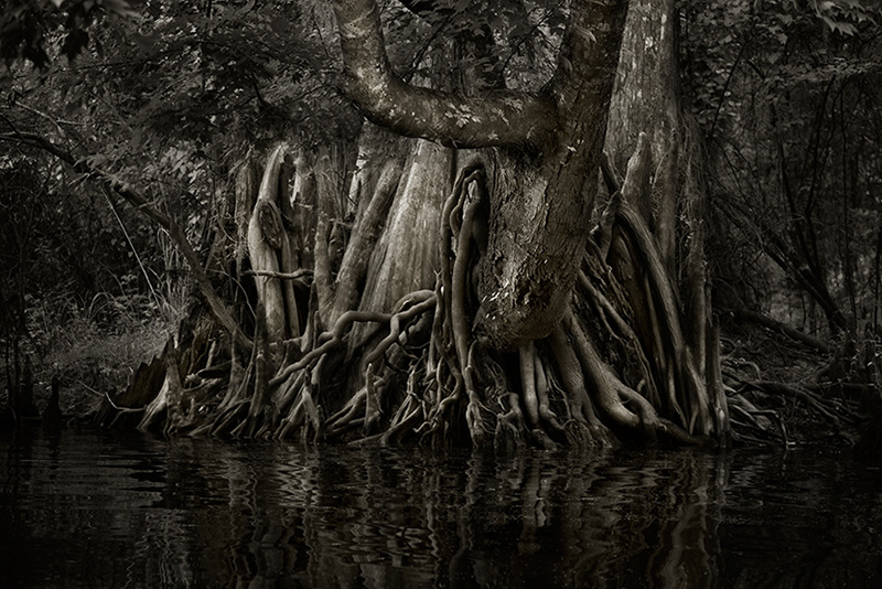 Savannah-Swamp-2_web